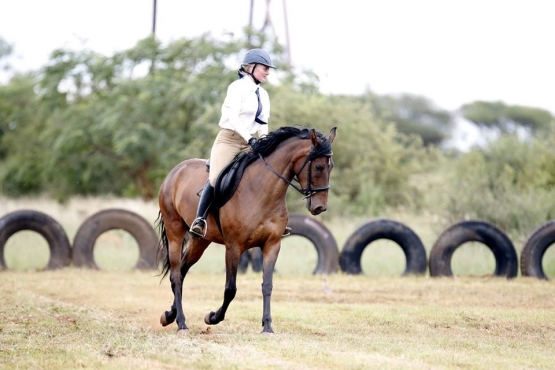 ** SUPER talented mare FOR SALE **