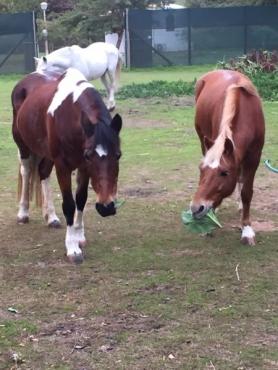 Fat Pony winter Camp