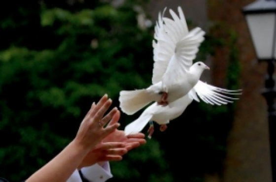 White dove release for any occasion
