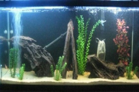 Tan aquarium gravel for sale