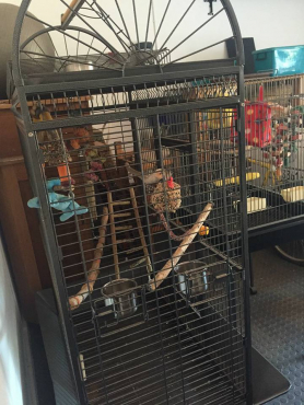 Parrot Cages for sale