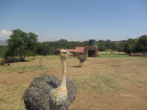 Paradise retreat Between Pretoria and Hartbeespoort