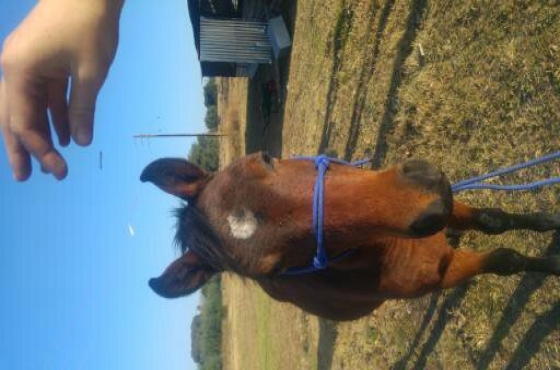 3 Horses for sale