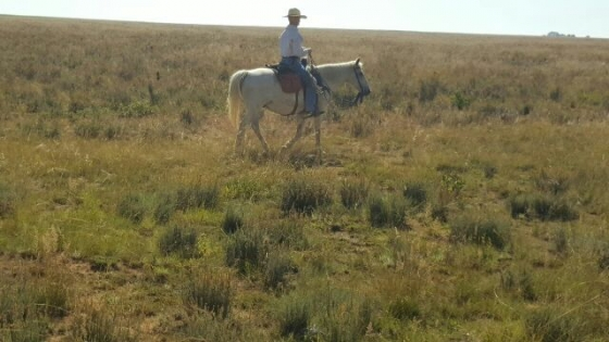 Outstanding trail horse for sale