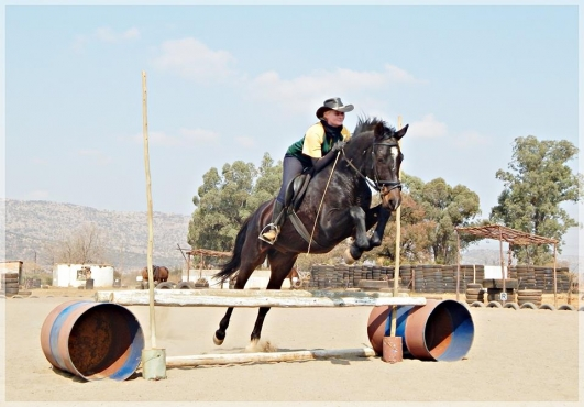 SA BOERPERD GELDING FOR SALE