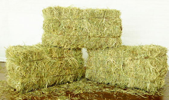 Hay-bales for rental