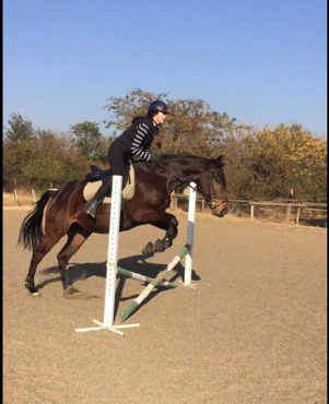 Magnificent Thoroughbred Gelding