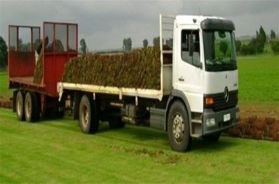 grass supply and compost