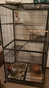 We have two Cages for Sale