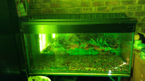 4 ft fishtank with stand, Gravel, canooy, light, heater and hang on filter