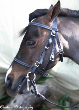 miniature horse tack