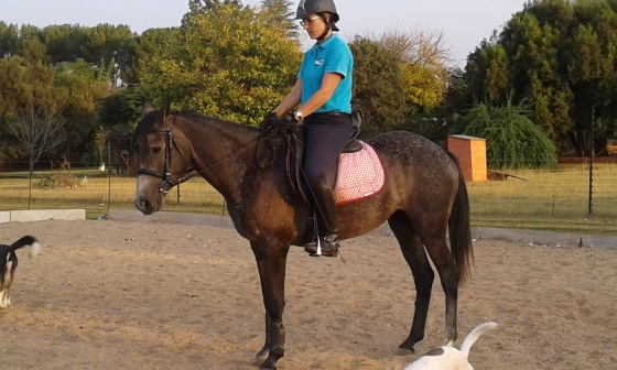 Registered Boerperd Mare for Sale