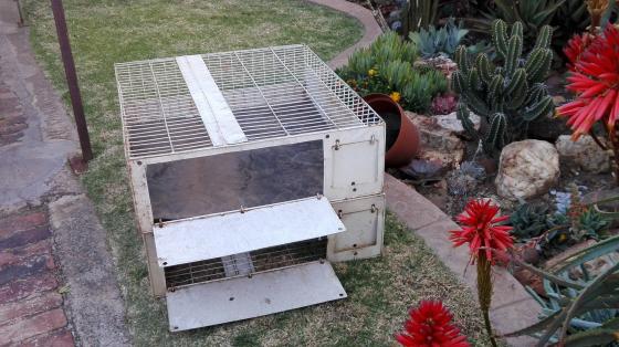 Pigeon training baskets