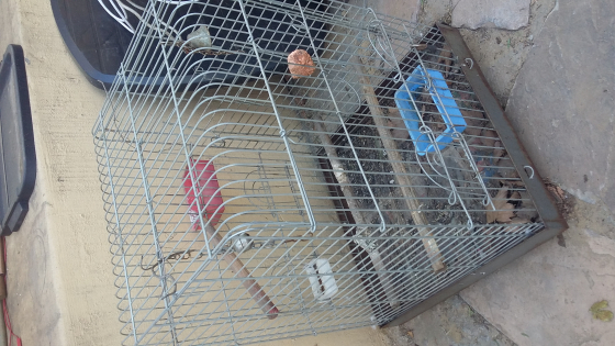 Parrot cage with food and water bowls