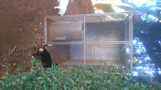 Outdoor bird cage for  sale