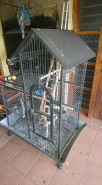 Groot african grey hok te koop