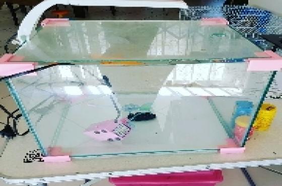 Fish tank 45 litre