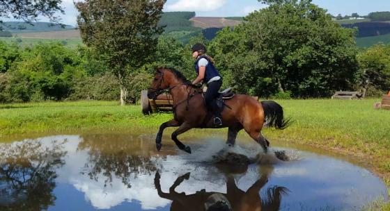 Super horse up for half lease
