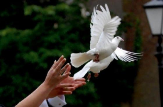 Snow white Dove release