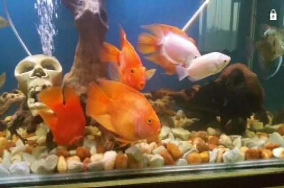 big fish 4 sale
