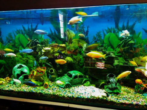 440 L Fish Tank with all accessories
