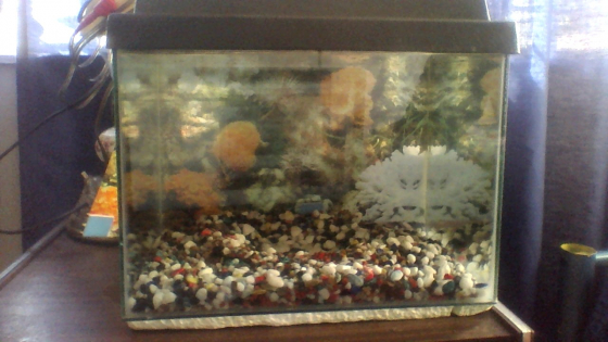 hi there fish tank for sale