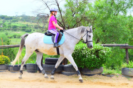 Horse Riding Lessons and Stabling