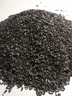 sunflower seeds - parrot mix and millets