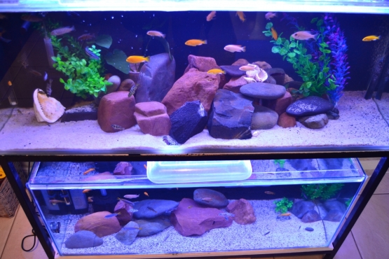 Selling 2 Tropical Fish Tanks & Stand