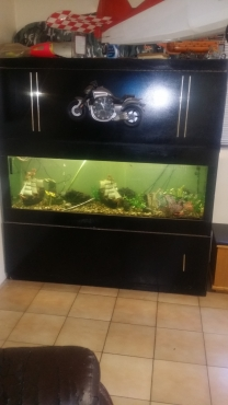fishtank 1.8m with cabinet and stand