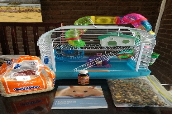 Dwarf Hamster with Cage