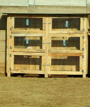 Rabbit Cages build on order