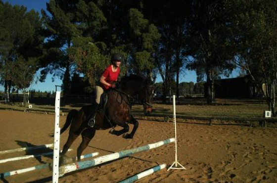 Registered pure-bred Thoroughbred gelding