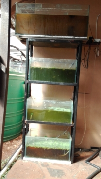 Fish tanks + stand