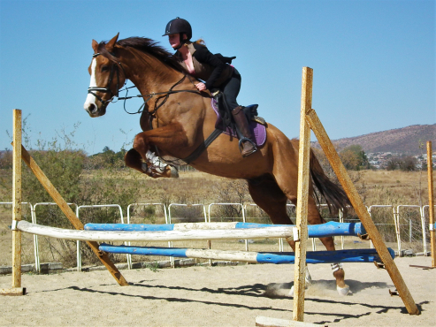 Ideal junior or nervous riders horse - confidance giver