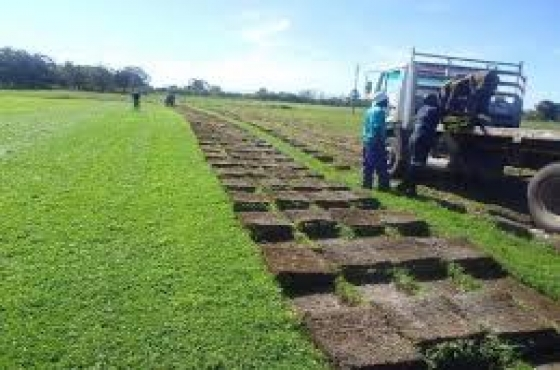 A-B-C Projects, Instant lawns, irrigation and tree felling