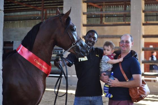 Registered Arabian Champion stallion