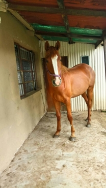 StunningTB x mare