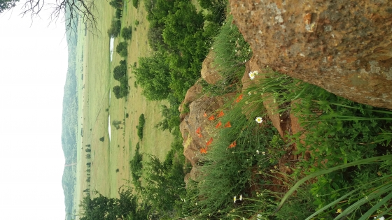 GAME/CATTLE FARM FOR SALE IN GREYLINGSTAd