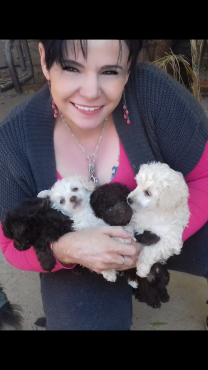 - French toy poodle puppies.registered breeder.  Vaccinated dewormed and vet checked.