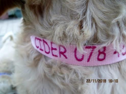 ID TAG DOG COLLARS
