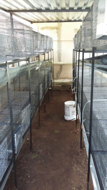 Rabbit cages and stands plus watering system for sale