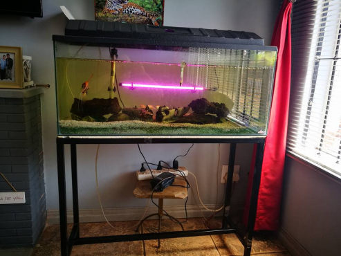 2 Fishtanks - 1 - 54L
