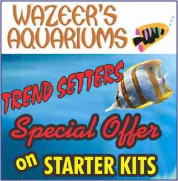 Marine Aquarium and Tropical Aquatic Fish Specialists