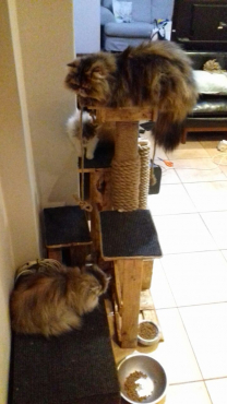 wooden cat climbing ladder