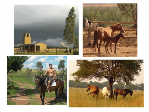 HORSE/PONY STABLES TO RENT