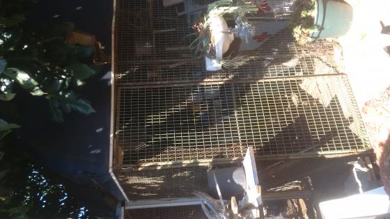 Outdoor Walk-in Bird Cage