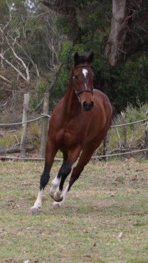 Tb gelding with loads of potential