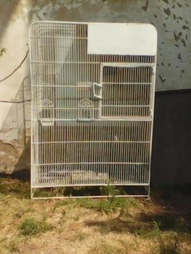 3x Baby Cockatie's  & 1 Bird Cage