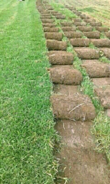 charlesprojects*we supply,kikuyu grass full sun100% fresh farm roll on lawn.
